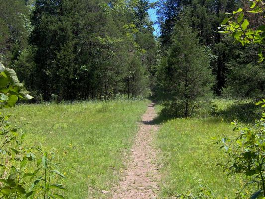 Hidden Springs Trail in Cedars of Lebanon State Park, Tenn. (Wikimedia)