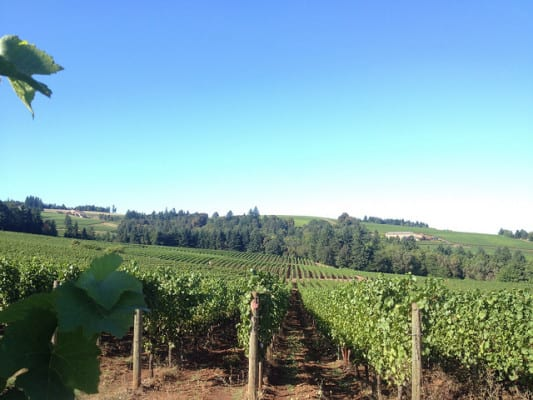 View of Sokol Blosser Winery in Dayton, Oregon. (Photo by Jameson Fink/flickr)