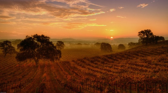 Morning at a vineyard in Paso Robles, California. (Photo by Malcolm Carlaw/flickr)