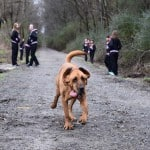 Bloodhound Wanders Into Alabama Half Marathon, Finishes 7th Thumbnail