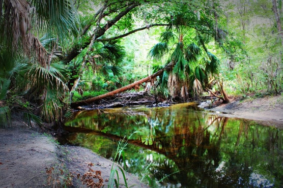 The River Loop trail in Alafia River State Park in Lithia, Fla. (Photo by Global Reactions/flickr)