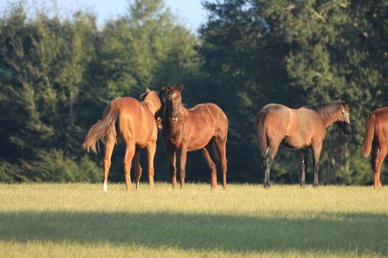 A horse farm in Ocala, Fla. (Photo by Christopher Stadler/flickr)