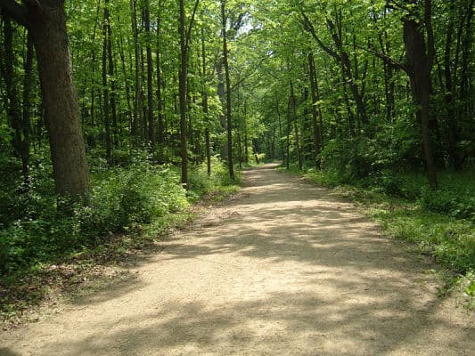 A stretch of the Des Plaines River Trail in Lake County, Illinois. (Photo by Dave Piasecki/Wikimedia)