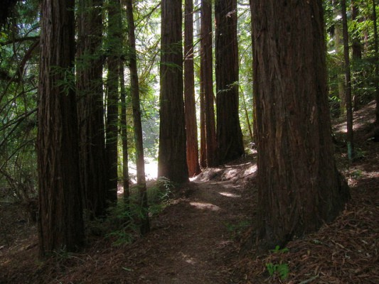 Scenery along the Crystal Springs Trail in Huddart Park, Calif. (Photo by Miguel Vieira/flickr)