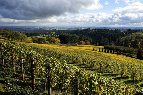 The hills of Dundee, Oregon's wine country, photographed in November 2014. (Photo by Bill Reynolds/flickr)