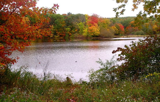 Clark's Pond near the Quinnipiac University campus in Hamden, Connecticut. (Photo by Wikimedia)