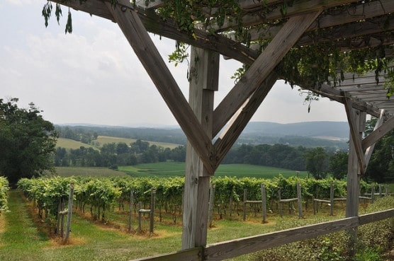 Fields and vines in Virginia's Loudon County. (Photo by rlimousinephoto/flickr)