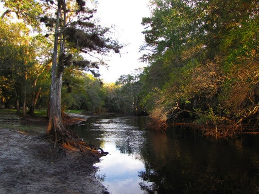 Along the riverbank in Withlacoochee River Park. (Photo by B.A. Bowen Photography/flickr)