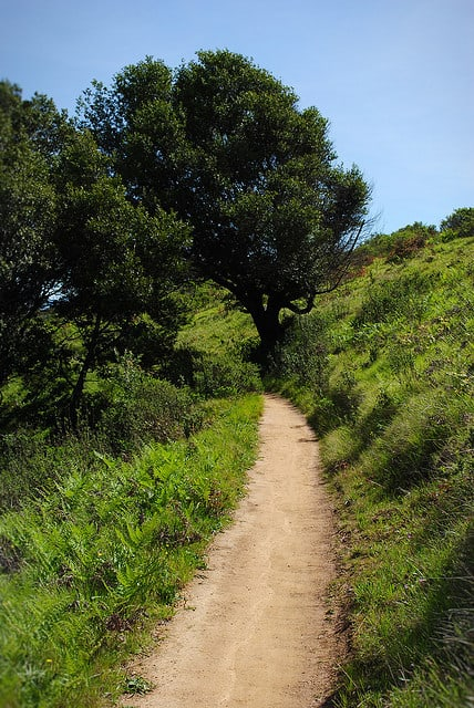 One of the many trails that wind through China Camp State Park in San Rafael, California. (Photo by Lisa Williams/flickr)