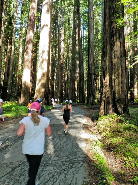 Runners in the 2010 Avenue of the Giants Half Marathon near Weott, California. (Photo by Michael McCullough/flickr)
