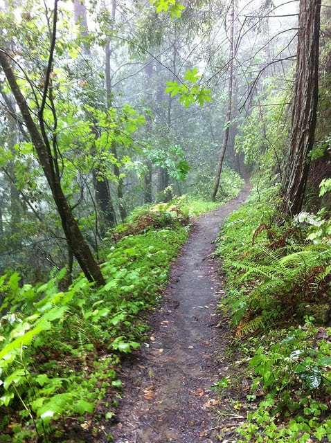 A photo of the Nisene Marks Trail, taken during the 2011 marathon there. (Photo by fogcat5/flickr)