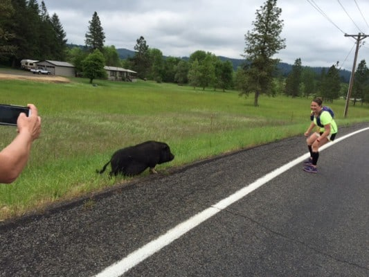 Pigs on the course at the Grapes of Half. (Photo courtesy Pink Buffalo Racing)