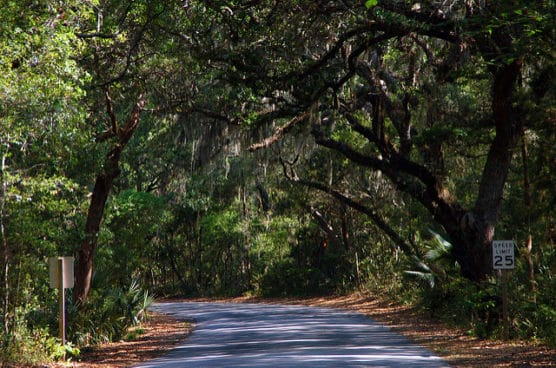 The road through the forest to Fort Clinch State Park on Amelia Island, Fla. (Photo by Britt Reints/flickr)
