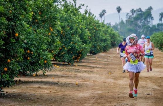 Runners make their way through the California Citrus State Historical Park during the second annual Citrus Heritage Run presented by the Riverside Road Runners in Arlington Heights Sports Park in Riverside, Saturday, Jan. 6, 2018. (Eric Reed/For The Press Enterprise/SCNG)